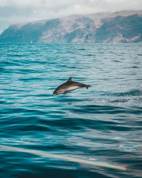 The Exceptional Cognitive Abilities of Dolphins