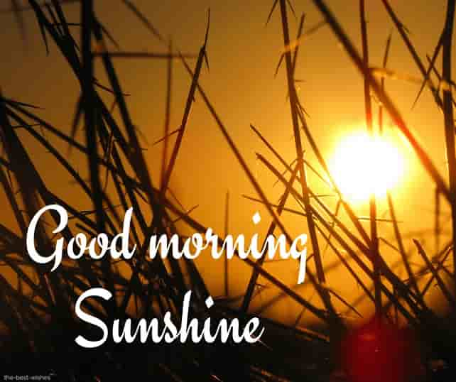 wonderful good morning sunshine images