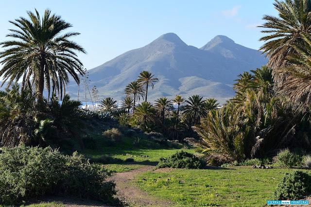 Palmeral en la Isleta del Moro, Cabo de Gata