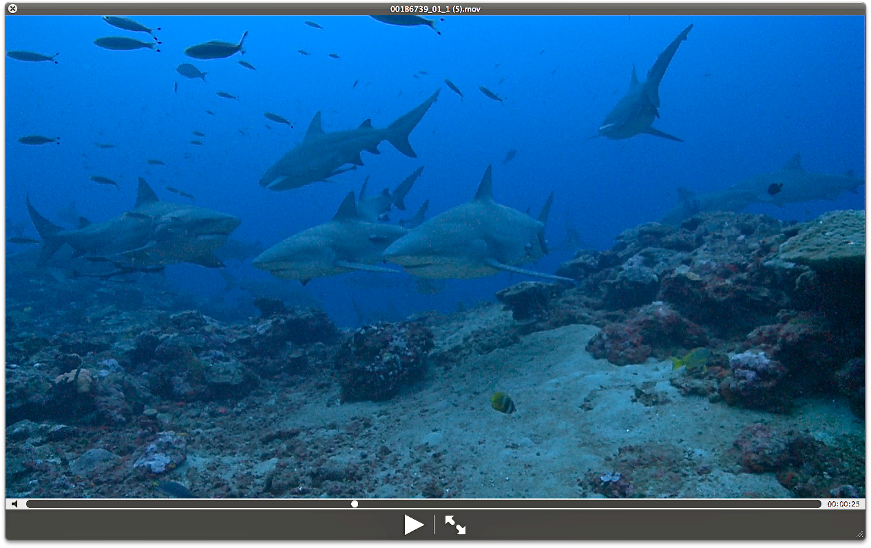 The Best Shark Dive in the World!: The Fiji Shark Dive ...