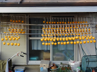 昨日から干し柿作りを始めました