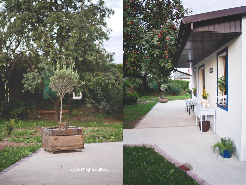 drzewko oliwne, oliwka