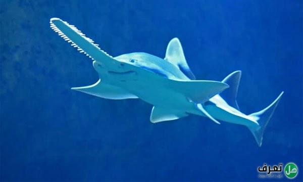 القرش المنشار