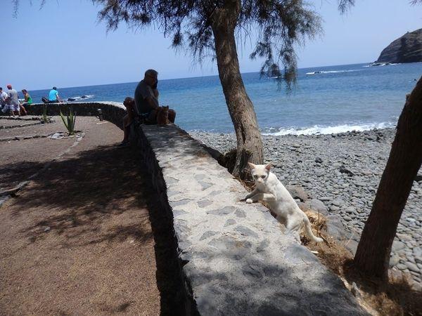 playa de la caleta la gomera