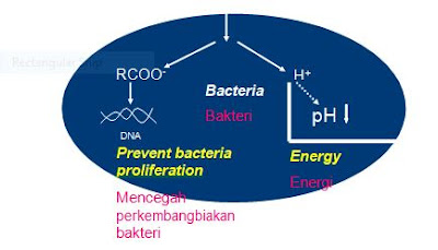 Cara asam organic membunuh bakteri Diare Pada Anak Babi
