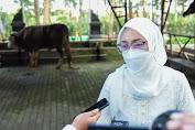 39 Sapi dan 158 Domba, Pemkab Purwakarta Sebar Hewan Kurban ke Desa-desa