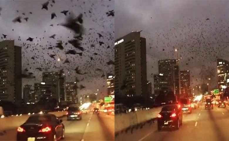 Aneh, Ribuan Burung Hitam Tiba-Tiba Menyerbu Kota, Pertanda Bencana?