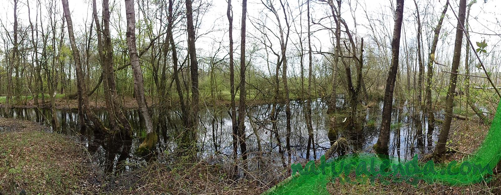 panoramica 1 del pantano con arboles