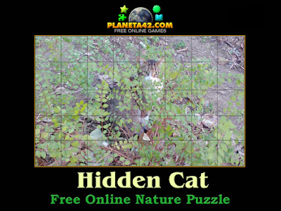 Hidden Cat Puzzle