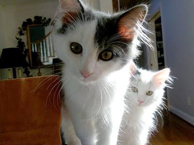 fotografia de simpaticos gatitos