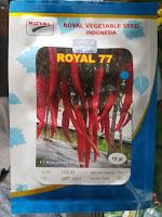 cabe royal seed, cabe besar, jual beni h cabe besar, jual benih royal seed, budidaya cabe, lmga agro, toko pertanian
