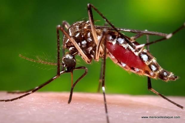 Pernambuco tem 153 municípios com risco de novo surto de Dengue, Zika e chikungunya