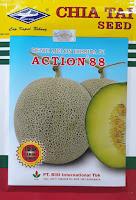melon,benih melon,melon action 88,cap kapal terbang,buah melon,bibit melon,lmga agro