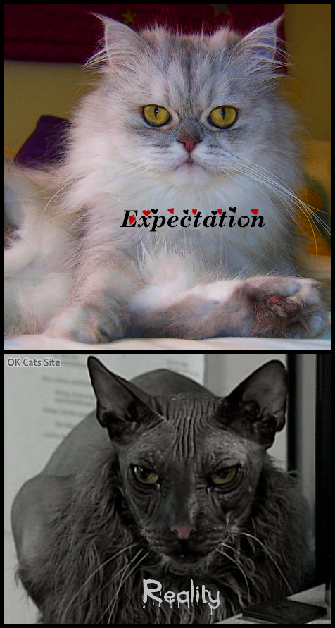 Photoshopped Cat GIF • Get a cute fluffy cat, they said • Expectation and reality, hahaha huge FAIL!