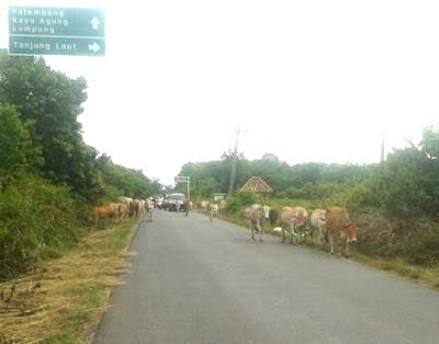 Ruas Jalan Muara Meranjat-Payaraman Butuh lampu jalan