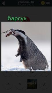 470 слов. все просто барсук ест ягоды с ветки зимой 16 уровень