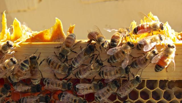 Ενδιαφέρομαι για άμμεση αγορά δύο μελισσιών