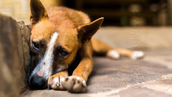 justica invasao domiciliar resgate animais direito