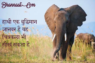 Facts About Elephants In Hindi हाथियों के बारे में कुछ रोचक तथ्य bhannaat.com