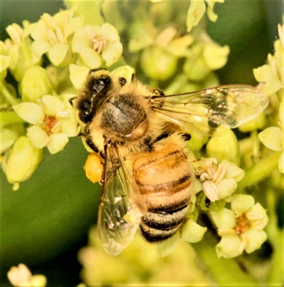 bee enjoying beautiful yellow flowers #ad