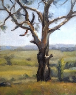 Landscape oil painting of a eucalypt with distant rolling hills.