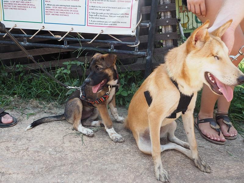 Ron and Libby at Lanta Animal Welfare