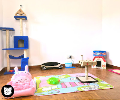 Cat sitting services in Singapore