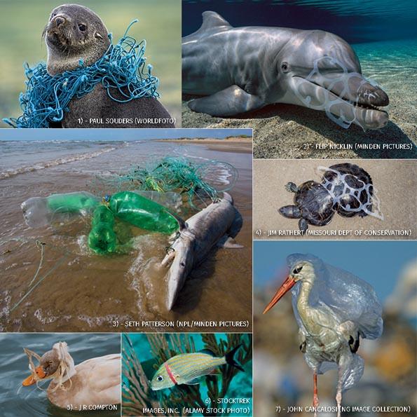 Dampak sampah plastik terhadap hewan di laut