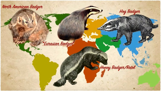 Map of Badger Species not to scale Beni and David Loti who