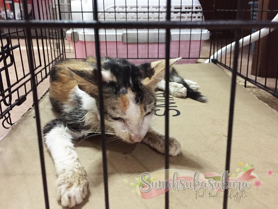 Apa Perlu Buat Jika Kucing Diserang Sawan?