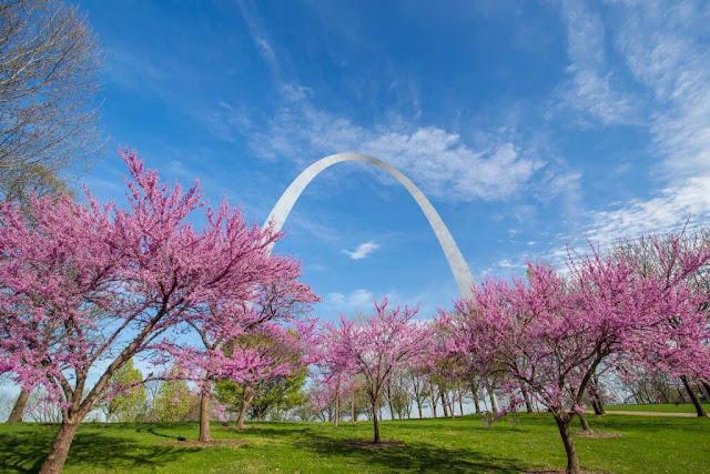 Biểu tượng nổi tiếng nhất của thành phố St. Louis – Cổng vòm (Gateway Arch) – được bao bọc bởi những hàng cây hoa anh đào tuyệt đẹp từ giữa tháng 3 đến đầu tháng 4. Hãy đến đây để khám phá Khu vườn Nhật Bản rộng 5,6 ha tại Vườn Bách thảo Missouri, nơi trồng một số nhiều loài hoa anh đào khác nhau như Higan, Yoshino, và Centennial.