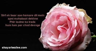 romantic true love shayari dp