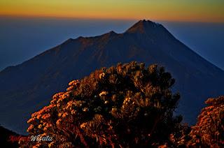 Edelways Sabana 1 Merbabu, Paket Wisata Pendakian Gunung Merbabu Ekonomi, Hemat, Bisnis, Eksekutif, VIP dan VVIP