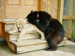 animales jugando  juntos