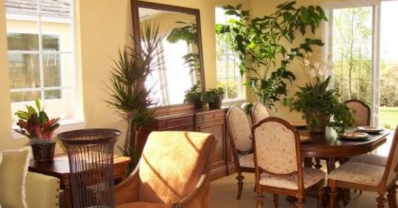 Ava inc jardinage comment garder ses plantes vertes for Jardinage interieur