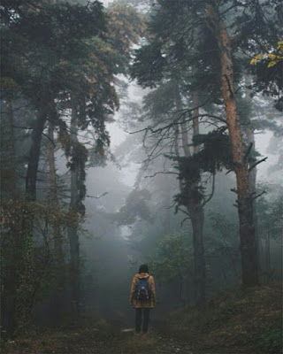 foto tumblr en bosque