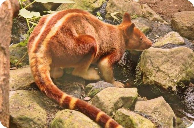 5 Fauna Indonesia yang Punya 'Kembaran' di Negara Tetangga