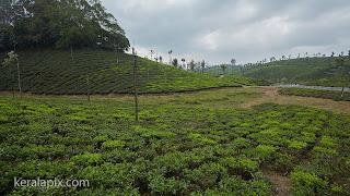 Tea estates at Valparai