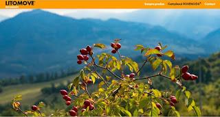 Site-ul Litomove.ro