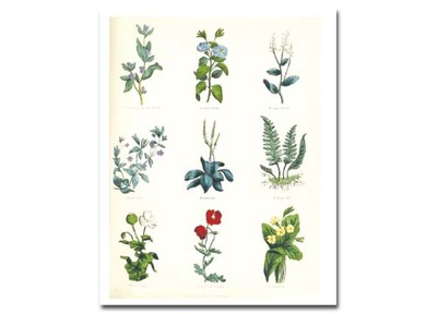 Download Printable Herb Painting Motifs Detail preview