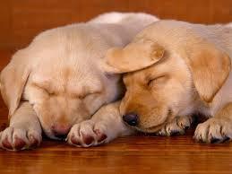 Sự Thật Bất Ngờ Về Giấc Ngủ Của Chó