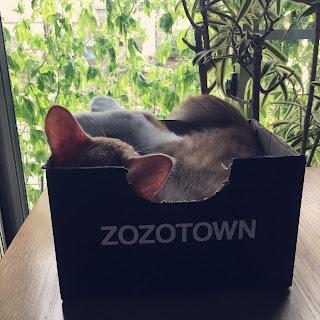 猫 箱 入る理由