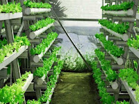 Kelebihan dan Kekurangan Pertanian Hidroponik