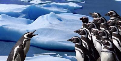 Fakta Unik  10.Fakta Unik Burung Penguin Yang Menggemaskan halo sobat Curahan online,Mau bertanya nih,Kamu udah pernah belum melihat secara langsung Burung yang satu ini,Yap! Penguin asal kutub selatan  yang sangat menggemasakan.Saya Yakin jika kalian sering jalan-jalan pasti tau dong,Apalagi bagi yang doyan jalan-jalan (Traveler/Traveling)pasti ga asing lagi ya dengan si penguin?Tapi selain lucu dan menggemaskan ada loh Fakta unik dari burung si penguin ini? udah pada tau belum?Nah kali ini kami akan kasih tau,Simak ya gays...!    Sepuluj Fakta Unik dari Burung Penguin:    1.Cara Burung Penguin Komunikasi Dengan Pasangan    Penguin umumnya hidup berkoloni dalam kelompok besar. Lantas, bagaimana cara mereka berkomunikasi pada pasangannya, jika dalam satu tempat yang sama terdapat ribuan penguin sekaligus?        Ternyata, Burung Penguinmenggunakan suara untuk membedakan satu sama lain. Misalnya pada emperor penguin yang menggunakan dua cabang syrinx untuk menghasilkan dua frekuensi berbeda secara bersamaan. Dari karakteristik suara yang khas inilah mereka bisa membedakan sesamanya.     2.Sangat Setia Pada Pasangan    Penguin adalah hewan yang monogami. Artinya, penguin betina dan jantan hanya akan kawin dengan pasangan yang sama sepanjang waktu.        Mereka juga akan merawat telur dan membesarkan anak-anak mereka bersama. Namun, penelitian menunjukkan bahwa sebagian kecil penguin betina memiliki beberapa pejantan yang berbeda pada musim kawin.    3.dapat berenang hingga kecepatan 22 mil per Jam    Setiap kekurangan selalu diciptakan dengan kelebihan. Begitu pula dengan penguin. Meski gak bisa terbang, penguin jago banget berenang, lho! Di daratan, penguin mungkin terlihat lucu dan lambat saat berjalan, tapi mereka bisa benar-benar lincah di dalam air.          Jika spesies burung lain menggunakan kaki untuk mendorong mereka berenang, penguin menggunakan sayapnya yang kokoh. Otot dada memperkuat penguin untuk berenang, selain itu bulu mereka dilengkapi dengan lapis