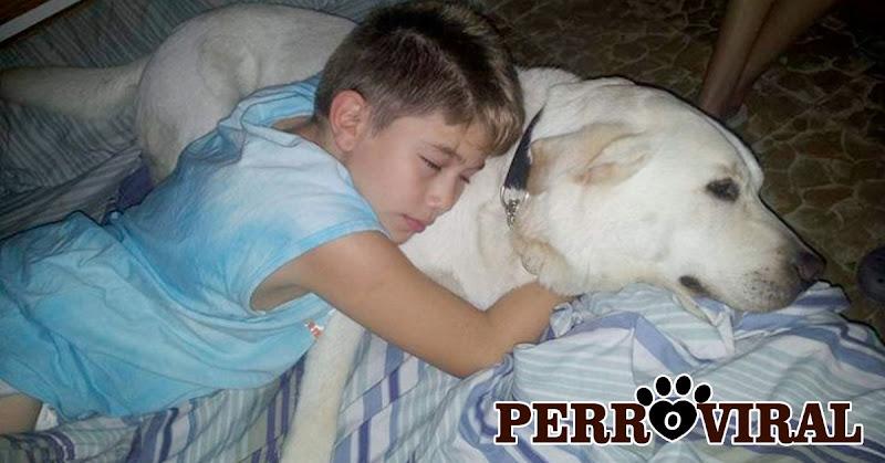 Quedó en silla de ruedas a los 9 años y un Perro se convirtió en su mejor amigo