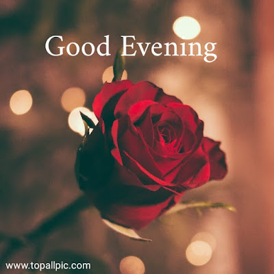 wishes good evening images with rose flower