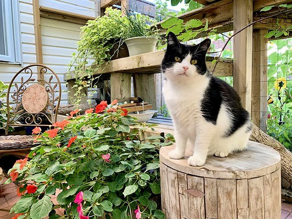 black and white rescued cat happy in his garden