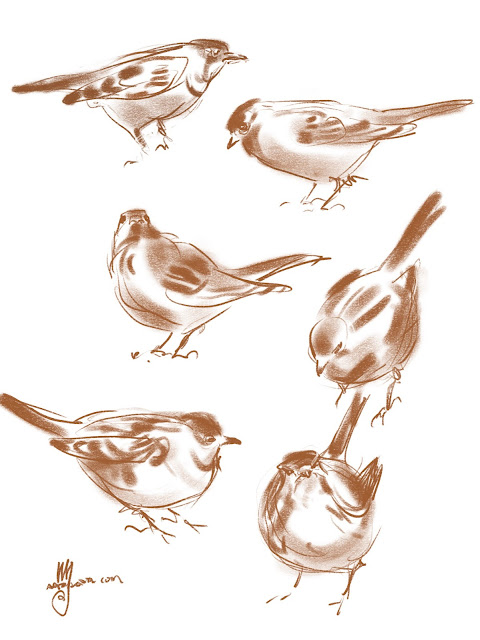 Bird doodles By Artmagenta