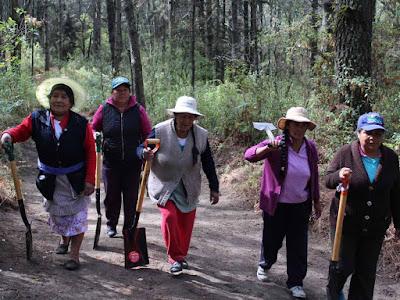 Ellas usan picos, palas y machetes para proteger el Parque Nacional Malinche