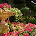 Η πέτρα ποτέ δεν έπαψε, κι ούτε θα πάψει, να ονειρεύεται τον κήπο της ... -ΑΡΓΥΡΗΣ ΧΙΟΝΗΣ